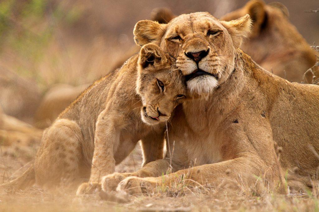 El rey del parque Kruger