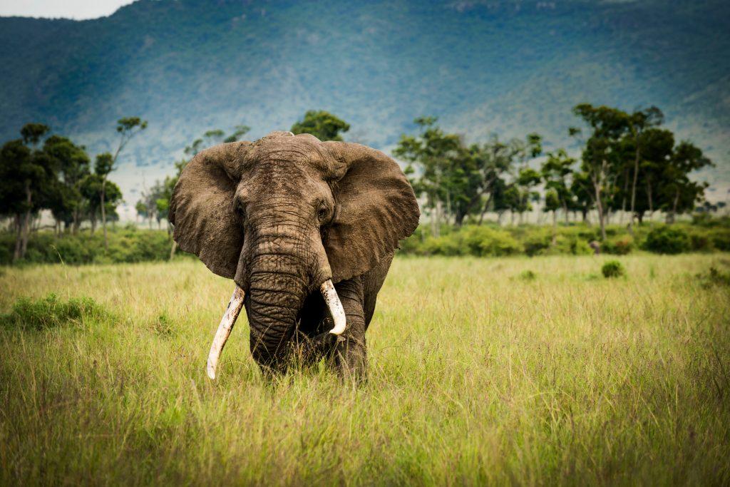 Viajar a Sudáfrica Safari