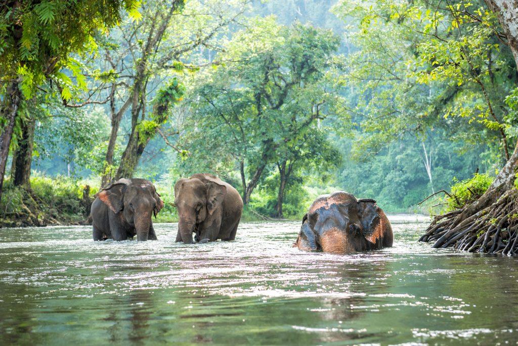 selva del norte de Tailandia